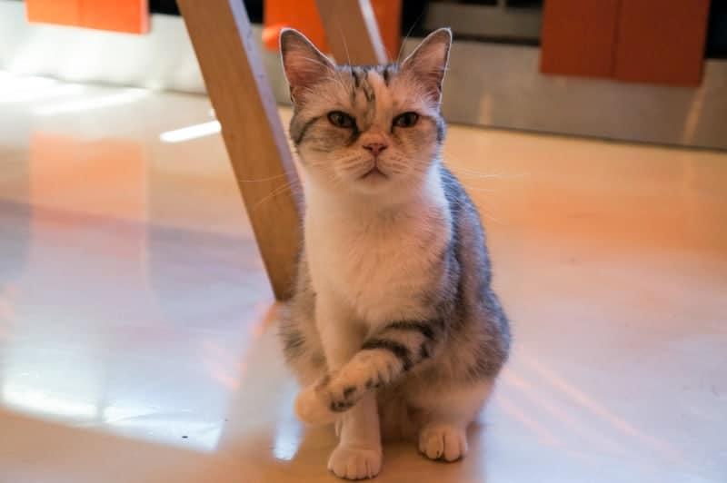 cat-cafe-seul-12