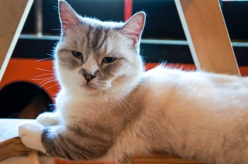 cat-cafe-seul-16