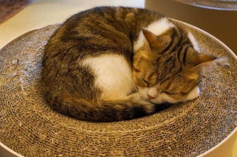 cat-cafe-seul-6