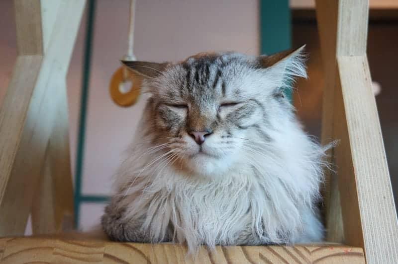 cat-cafe-seul-9