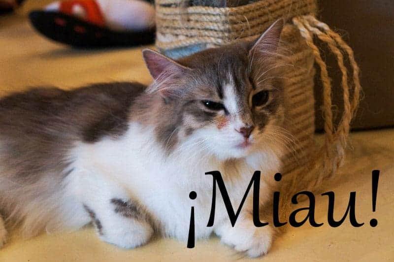 cat-cafe-seul-miau