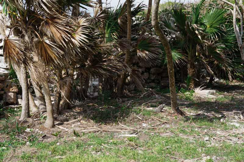 tulum-iguanas-3