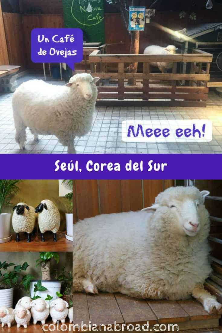 En Seúl podrás ir al Thanks Nature Cafe, el café donde dos lindas ovejas te darán la bienvenida.