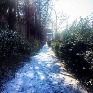 When it snows just follow the snowy trail and seehellip