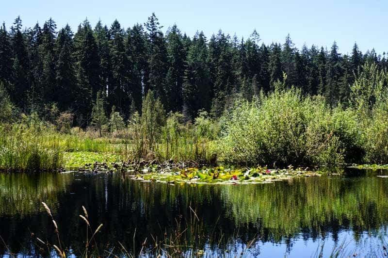 vancouver-stanley-park-beaver-lake