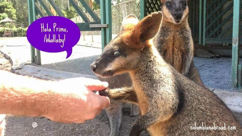 Visitando Koalas y Canguros en Australia